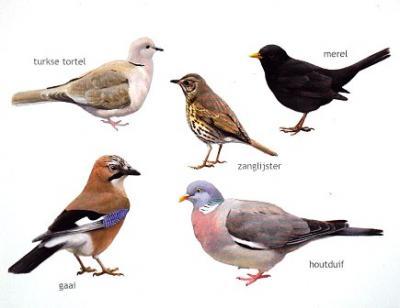 Elwin van der Kolk - diverse vogels 3