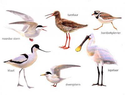 Elwin van der Kolk - diverse vogels 4