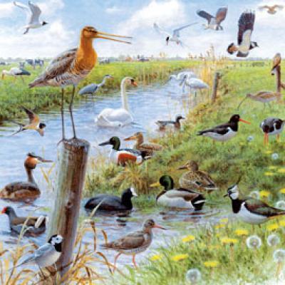 Elwin van der Kolk - weidevogels