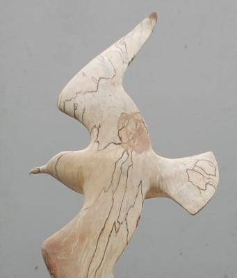kokmeeuw (detail)