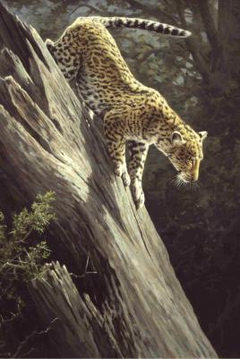 Dick van Heerde - luipaard