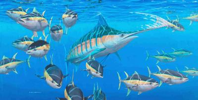 Jeroen Verhoeff - blue marlin and yellowfin tuna