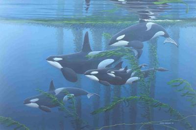 Jeroen Verhoeff - orka's